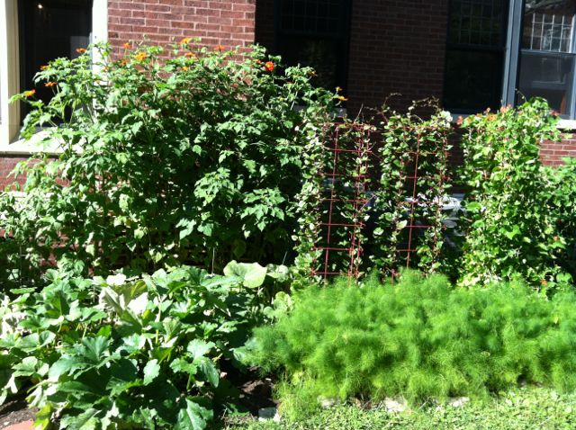 Malabar spinach climbs the towers while fennel flourishes below.